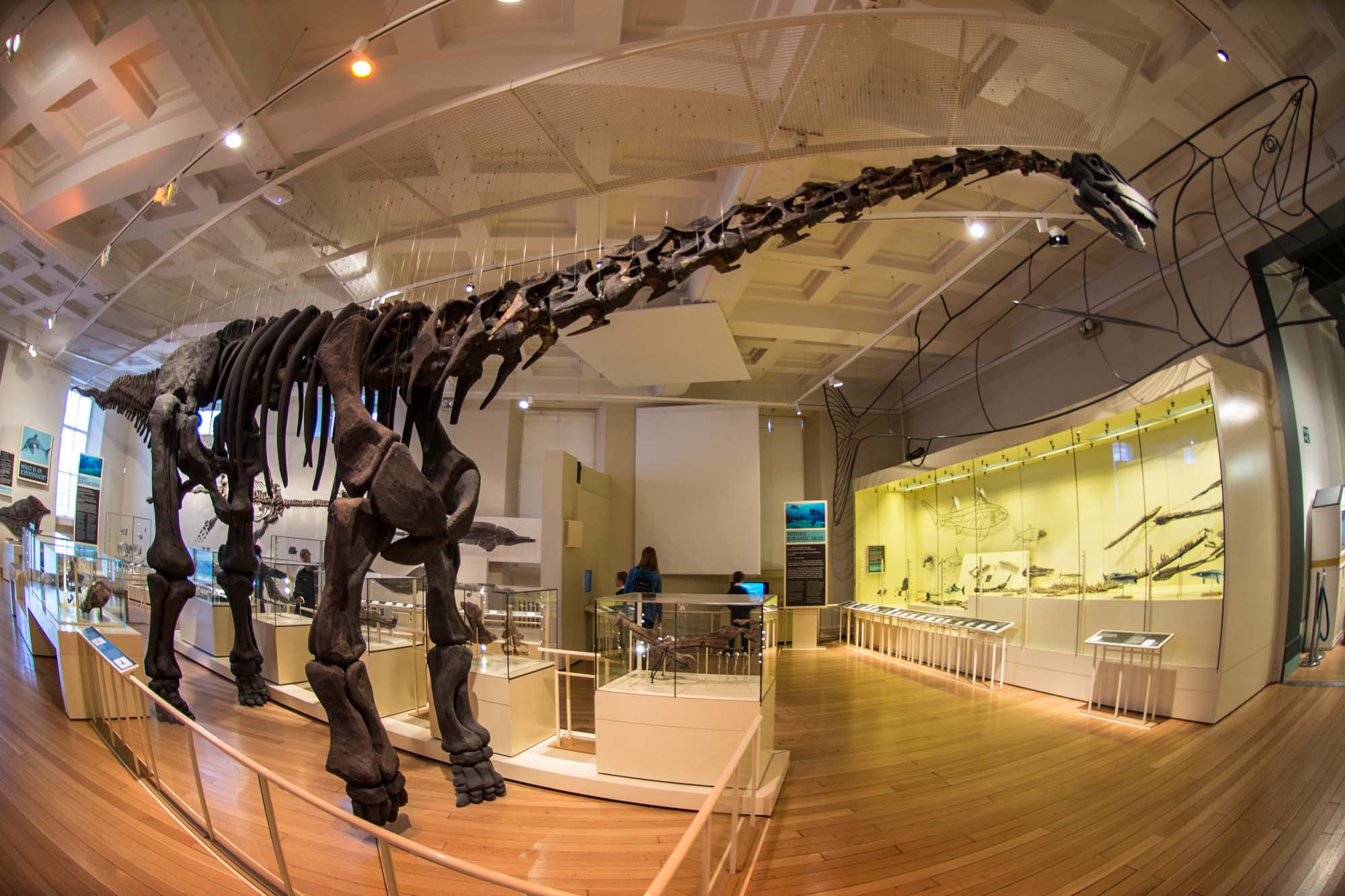 The Dinosaur Gallery as it looks today -